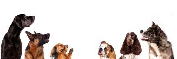 urgencias clinica veterinaria mallo otura